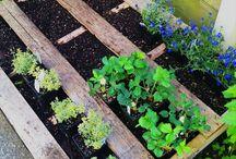 Zöldséges kert