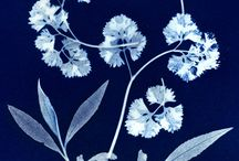 Blue Prints: Cyanotypes