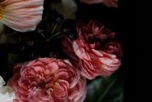 [• flowers •]