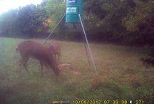 OC 2 Live-Trail Cam 2012 / Trail Camera Photos Oak Creek II
