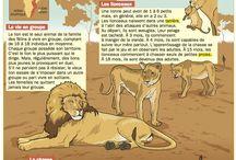 exposé sur les animaux