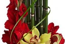 Orchideák / Növények