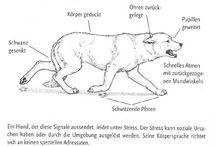 Körpersprache / Hundebeschäftigung, Hundeerziehung, Urlaub mit Hund, Spass mit Hunden