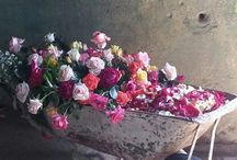 """weddings at """"the rose shed"""" / some of the beautiful weddings we have hosted"""