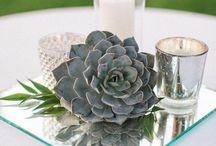 Succulent centrepieces
