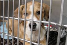 Shelter stories / Stories I found on internet re: shelters' environment