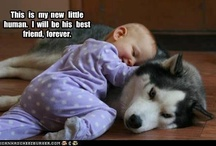Babies/Children and Dogs