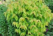 Plants for Tash