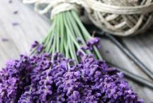 Lavander Love / Beautiful lavander