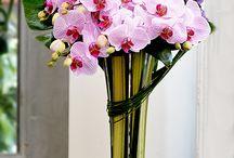 Février - Des fleurs, une saison