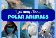 Polar animals.North