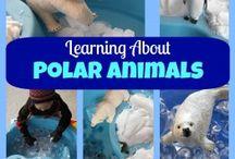 Polar animals.North