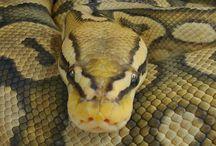 Snake&Lizard