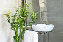 Best bathroom plants - add a touch of nature