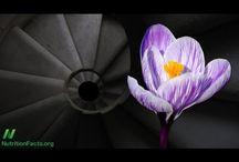 Saffron / Anything About Saffron