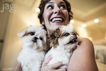 wedding pets / Because you want your best friend there on your wedding day. Pets make weddings all the more memorable.