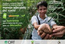 #World Soil Day 5 Dec / #DíaMundialDelSuelo / 5 December is World Soil Day. Yes, since 2013, soil has its official celebration Day!  CIAT actively joins the campaign to highlight the importance of soils for food security, climate, biodiversity, water availability and quality; and share the results of our research and actions across the tropics to restore degraded land, improve soil fertility and crop productivity, become climate smart, and effectively fight poverty and hunger. Take this opportunity to know more about soils!