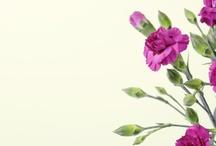 Jardinería & Paisajismo / Jardines inspirados en diferentes estilos. Características y cuidados de algunas plantas.
