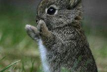 Cute animals / by Emily Walton Smith