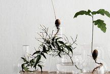 Plants. Flowers. Glass. Vase.