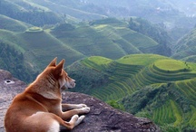 """Dogs / """"Dogs are not our whole life, but they make our lives whole."""""""