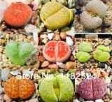 sementes de suculentas