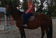 Kone / Tréning s koňmi.