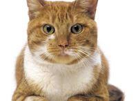 Katten / Allerlei katten, poezen en kittens