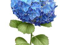 Dekoupage-kwiaty, rośliny