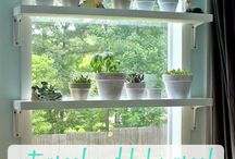 HOME: Window Plants / Growing plants in/on windows (sills)
