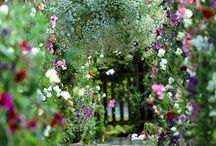 Garden Delights / by Stephanie Ablett,CNP