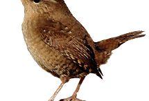 Vogels inspiratie