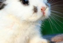 Must CUTE ANIMALS ON THE WORLD