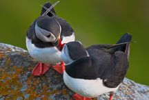 puffin love / by Flor Lopez