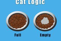 Cat / Les chats...