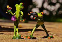 frog Stomp / Https://pixabay.com