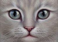 dessin chat