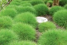 groene pollen