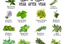 Mack and Pops herb/vegetable garden