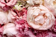 BLOOM / Flowers in bloom, beautiful colours. Bloemen voornamelijk pioenrozen. Peony
