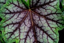 Fabulous Foliage / Foliage can be just as effective as flowers in your garden.