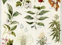 Printable Botanical Lovelies / by Gyöngyi Nagy