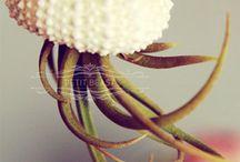 Flora / by Julie Arturo