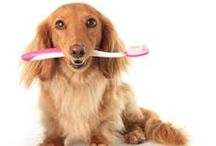 Pet Dental Health is Important / Dogs and cats, and even ferrets need dental care too!