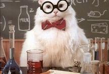 Chemistry cat LOL / by Mindy Bryde