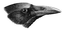 Crows & Ravens <3 / This shows my love for the dark birds. Forever & Always! Plus, I have a cat named Crow & a Cat that is at the rainbow bridge waiting for me named Raven! <3