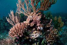 Ocean reefs / by Pamela Trevisan