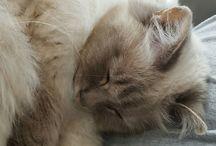 my sweets / mijn lieve kittens