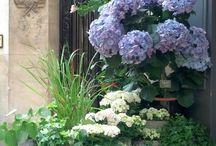 Flowers+gardens