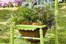 Virágok, kertek / Fotók, érdekességek gyönyörű virágokról, kertekről, hangulatokról